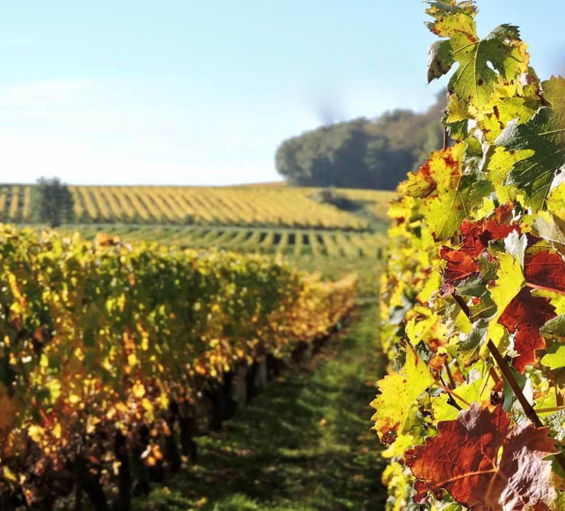 Routes des Vins de Loire